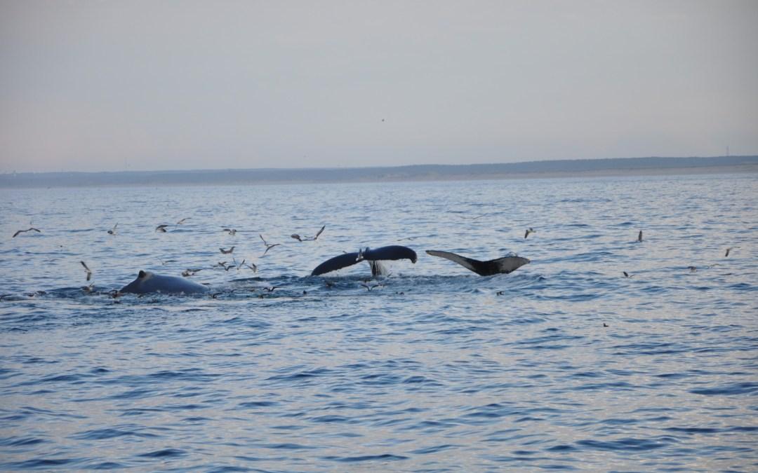 Hacia un acuerdo para alta mar: un océano saludable para un planeta sostenible