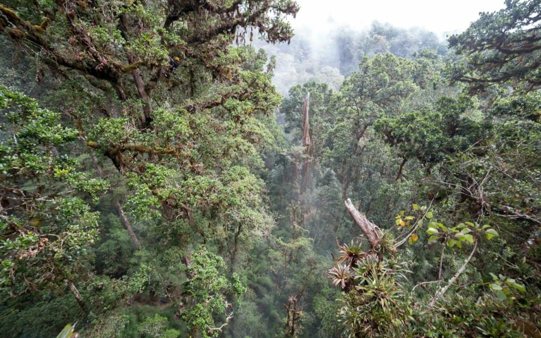 """Bosques de Talamanca serían """"altamente vulnerables"""" al cambio climático"""