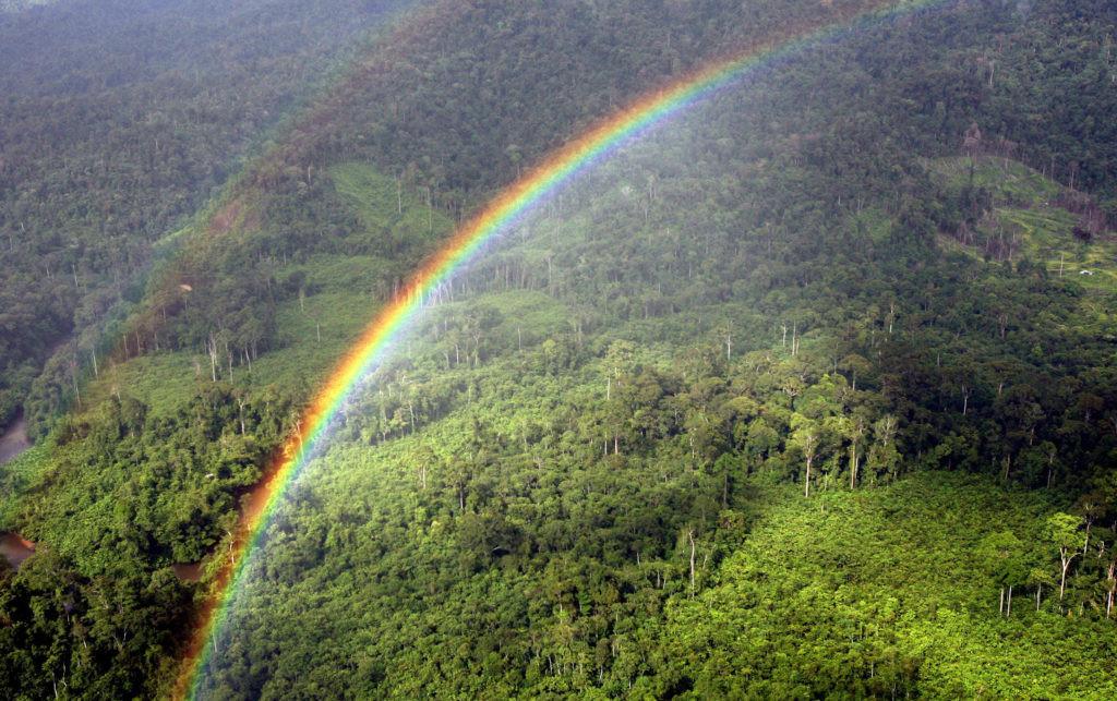 Costa Rica redujo sus emisiones en un 3% gracias al sector forestal