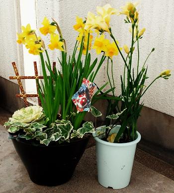 new year flower 正月 花 アレンジメント 水仙 フリージア