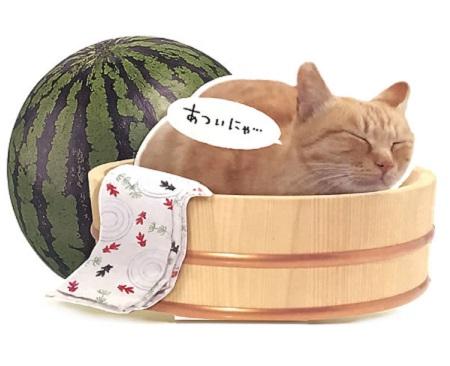 夏カード 桶に猫 立体カード サマーグリーティング サンリオ
