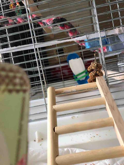 鳥用はしご