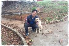 adestramento-cachorro-golden-retriever1