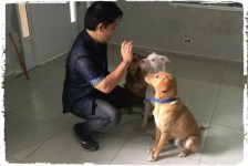 adestramento-cachorro-pitbull1