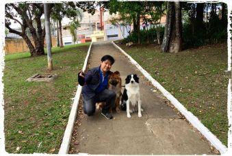 dog-walker-passeios-caes-cachorro-chow-chow-collie
