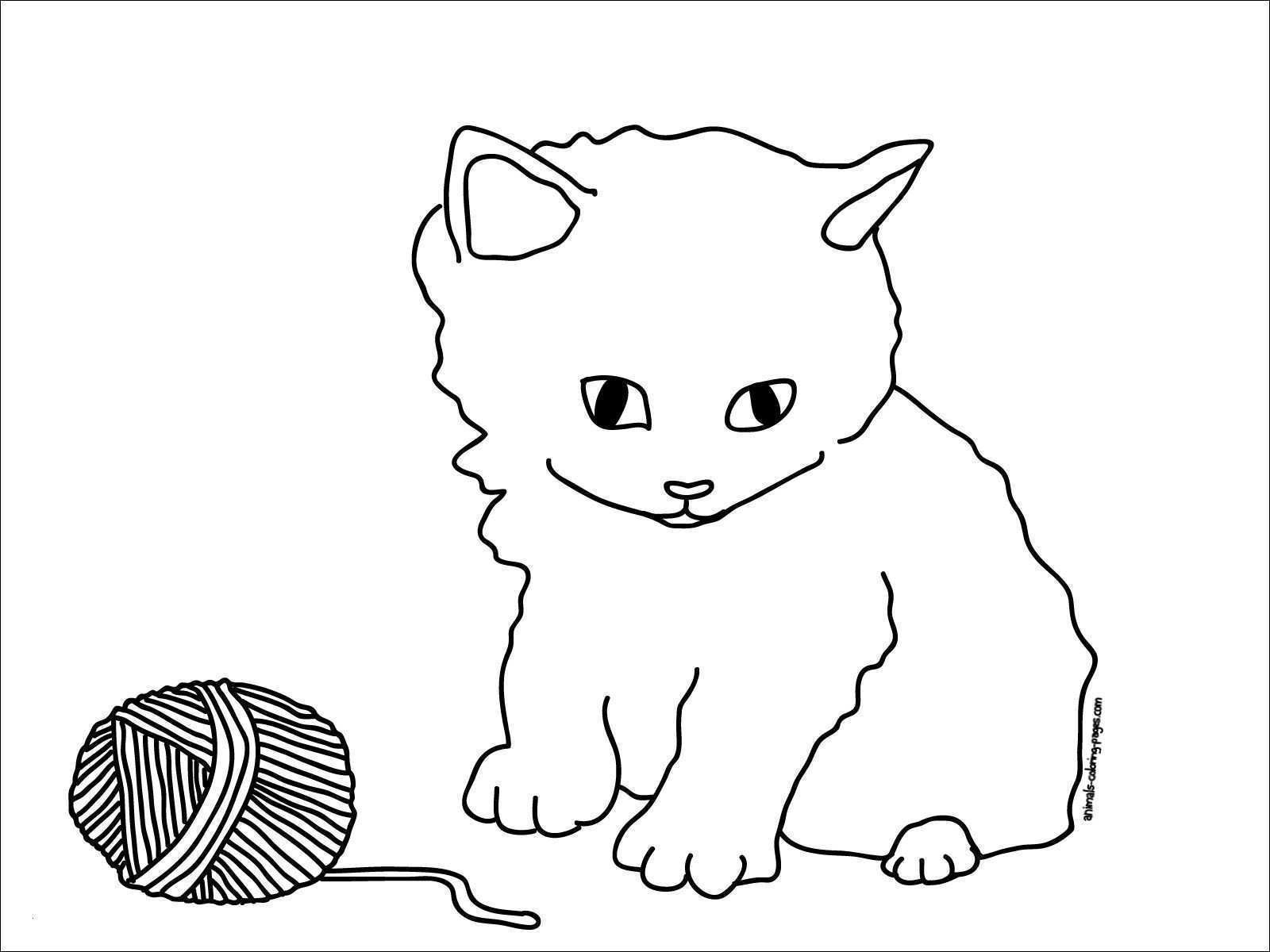 Katze Mit Wollknäuel Ausmalbild Katzen Zeichnen Lernen