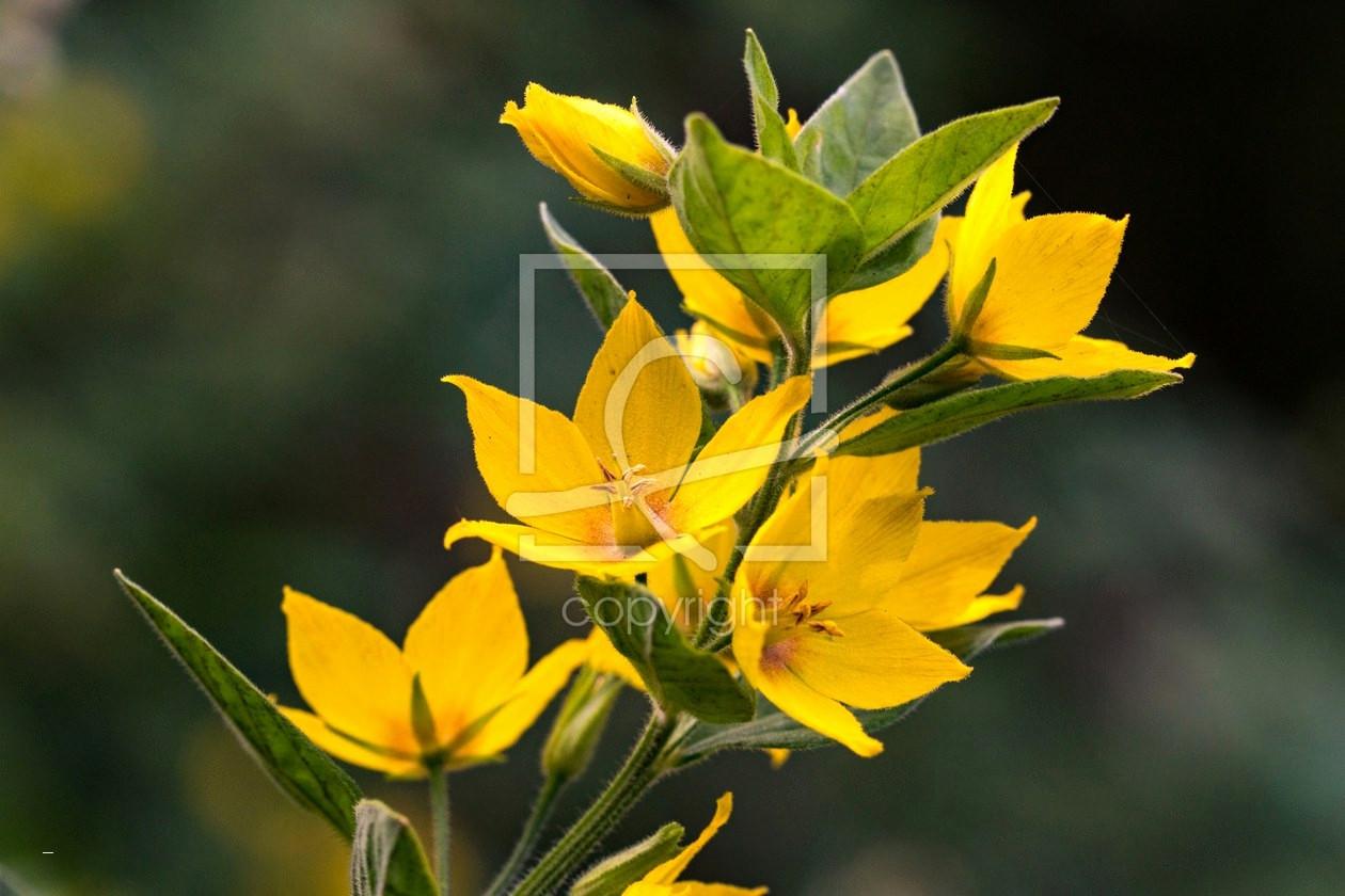 98 Einzigartig Blumenranken Zum Ausdrucken Das Bild