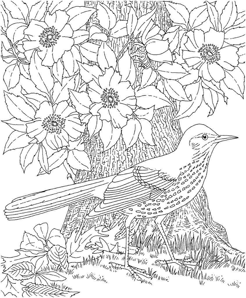 Fliegender Papagei Malvorlage Genial 42 Neu Papagei