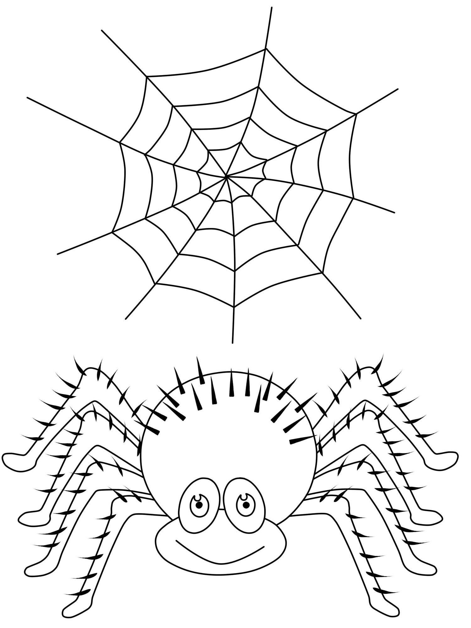 Halloween Ausmalbilder Spinne Einzigartig Spinnen Bilder