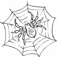 Spinnennetz Mit Spinne Malvorlage Einzigartig Spinne ...