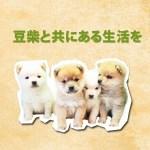 日本で初めての豆柴専門犬舎、豆柴の里 摂州宝山荘