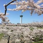 道民おススメ!函館五稜郭の花見はジンギスカンとライトアップ