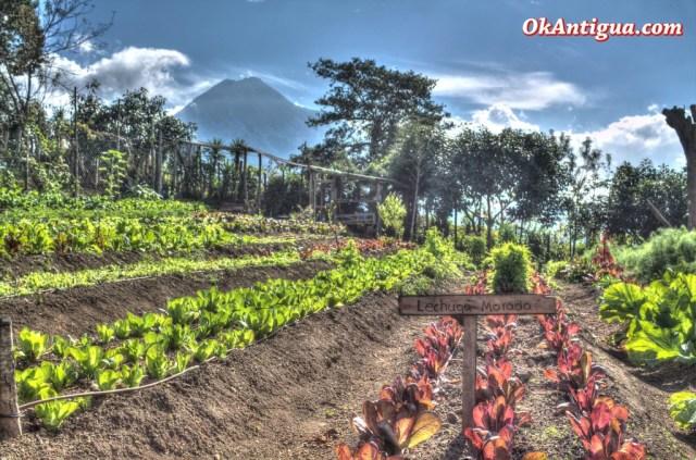 Organic Veggies - Cerro San Cristobal