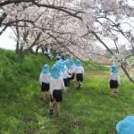 桜並木0308