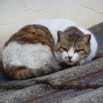 屋根の上で猫が寝ていたよ!
