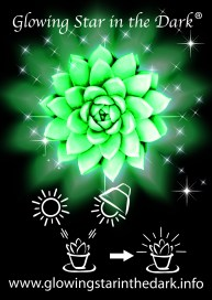 AMIGO PLANT - GLOWING STAR IN THE DARK 2