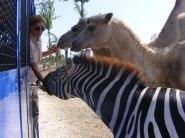Safari Ravenna visita in trenino