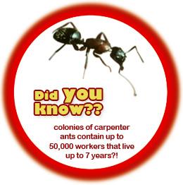 Ants Stinger Pest Control