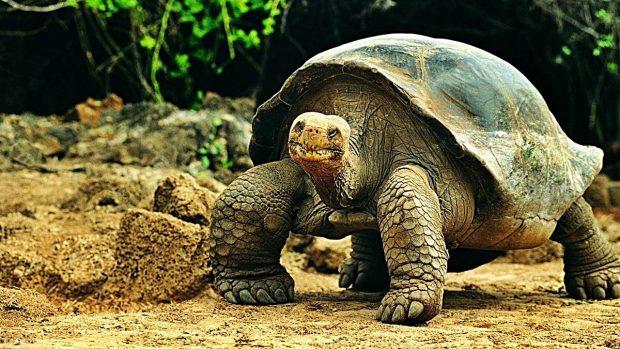 ¿Cuántos años viven las tortugas? - Record longevidad