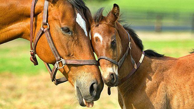 5 curiosidades sobre los caballos que debes saber - 01