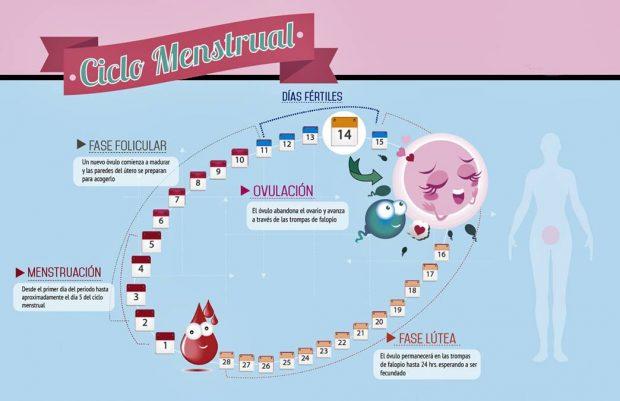 Todo lo que deberías saber sobre la ovulación y el ciclo ...
