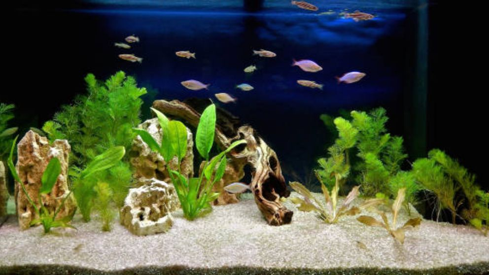 Cmo decorar un acuario paso a paso