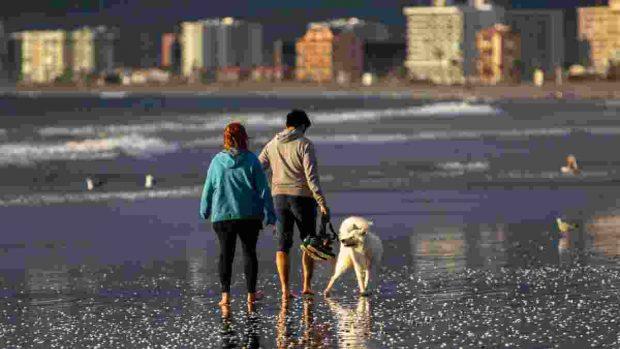 Sacar de paseo a perro