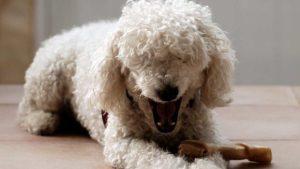 Perro con hueso