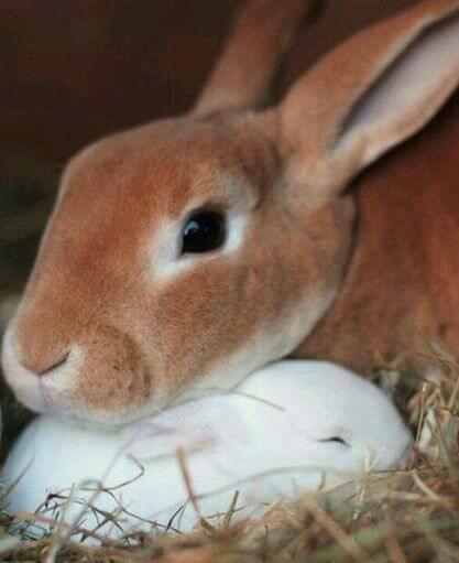 kelinci lucu 9