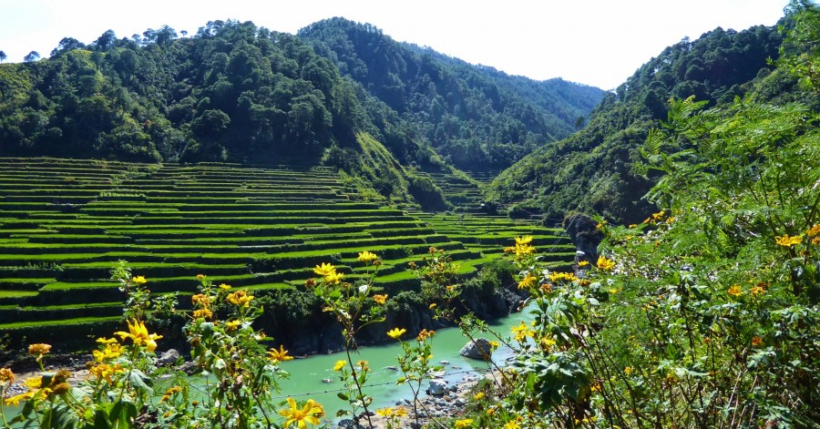 Kadchog rice terraces.