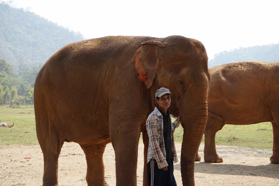 Mae Jan Peng and her mahout, Elephant Nature Park, Thailand, photo opportunity