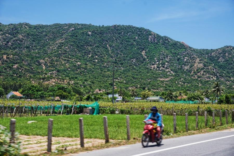 Vineyards on the coastal road, beach, paradise, motorbiking