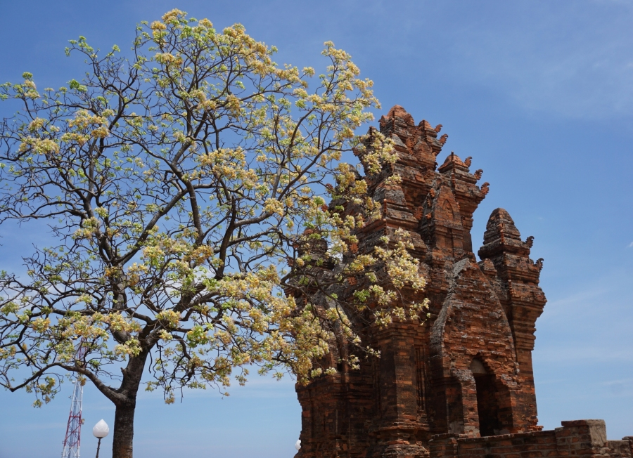 Phan Rang, Vietnam, Chap ruins, history, paradise