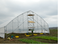 The hoop house, just moved from the salad patch to the tomatoes.