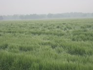 One of our wheat fields after a spring storm.