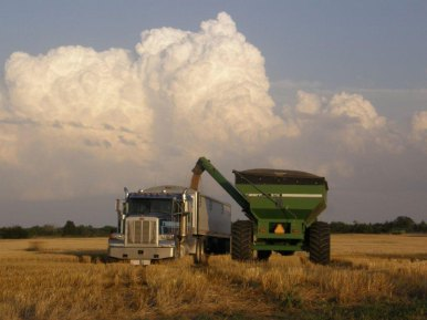 Harvest-2012-(163)