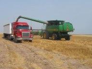 Unloading a combine into a semi.