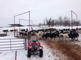 Snow isn't a problem for the Mitchells - it means much-needed moisture that will benefit grass when springtime comes.