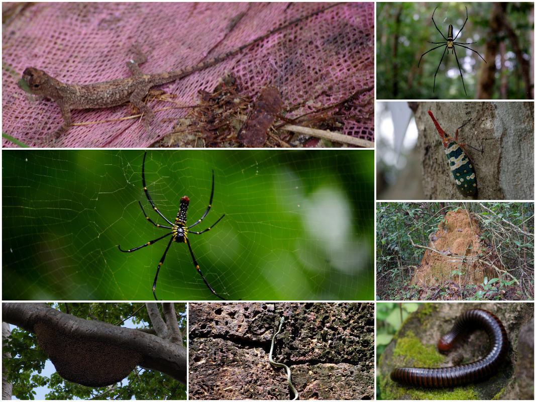 Park Narodowy Ream