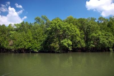 lasy namorzynowe Zatoka Phang Nga
