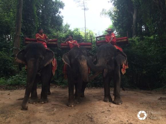 Słonie gotowe do jazdy, Kambodża kompleks świątyń Angkor Wat