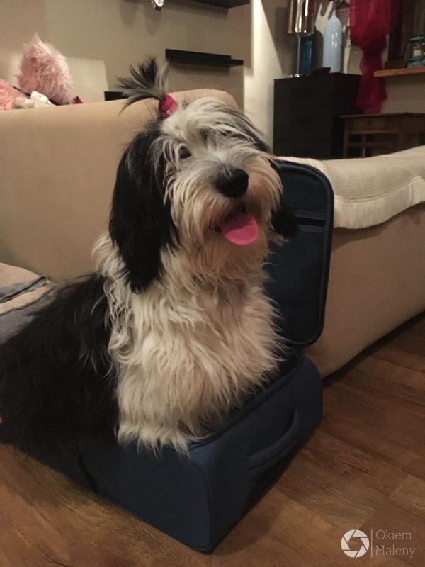 Jak byłam mała, to mieściłam się cała do walizki zajmowałam tylko połowę, a teraz chyba dupka mi się nie mieści już ...