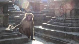 Swayambunath - Świątynia Małp