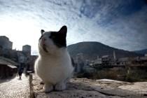 Mostar - miasto kotów