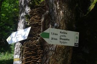 Szlaki w Gruzji znakuje PTTK