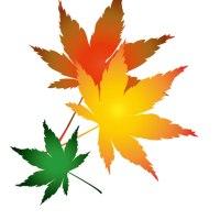 イラスト無料フリー素材「秋の楓」
