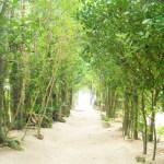 フクギ並木を観光