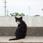 港の近くの猫