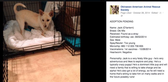 Pet Adoption OAARS | Okinawa Hai