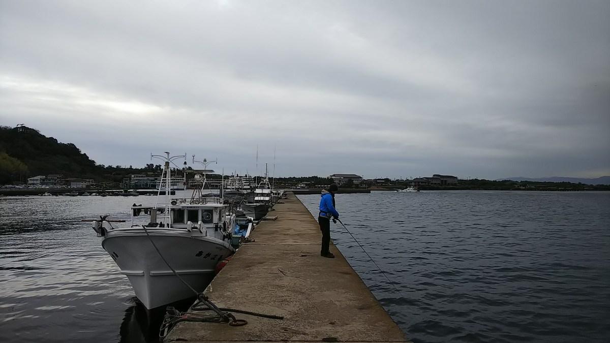 今、桜島港で青物は釣れるのか